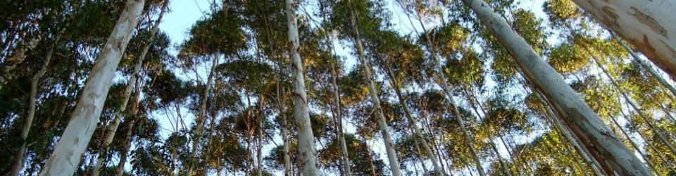Produtos fabricados com madeira de reflorestamento.